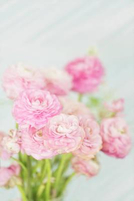 Photograph - Fluffy Pink Ranunculus by Susan Gary