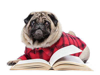 Read Photograph - Fluffy Pug Dog Laying By The Open Book. by Michal Bednarek