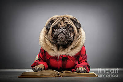 Photograph - Fluffy Pug Dog Laying On An Old Book. by Michal Bednarek