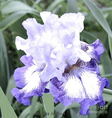 Photograph - Fluffy Purple Iris by Marsha Heiken