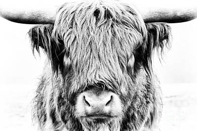 Cow Photograph - Fluffy by Tim Gainey