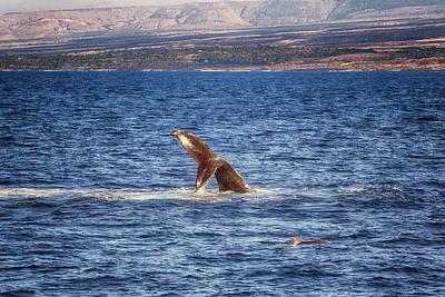 Photograph - Fluke Diving Humpback by Susan Rissi Tregoning