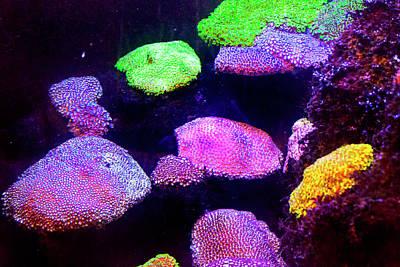 Photograph - Fluorescent Corals by Miroslava Jurcik