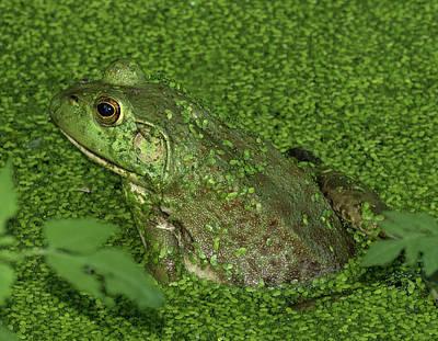 Photograph - Fluorescent Frog by Bill Jordan