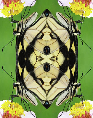 Digital Art - Flutterbug 2 by Lizi Beard-Ward