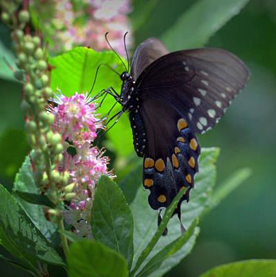 Photograph - Flutterby by Joseph Skompski