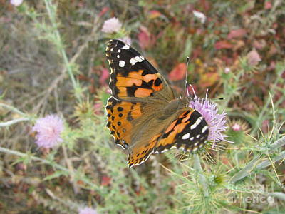 Photograph - Flutterby by Kristina Mull