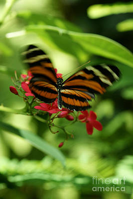 Photograph - Flutterby by Linda Shafer