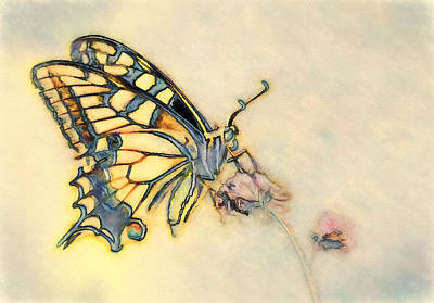 Color Photograph - Flutterfly Two by John K Woodruff