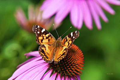 Photograph - Fluttering Breeze Butterfly by Christina Rollo