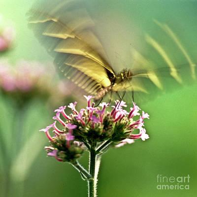 Fluttering Photograph - Fluttering Butterfly by Heiko Koehrer-Wagner