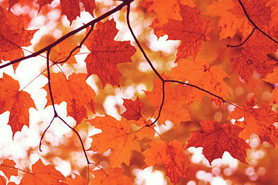 Photograph - Fluttering From The Autumn Tree by Angela King-Jones