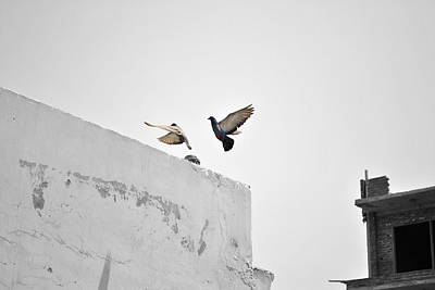 Photograph - Fluttering Pigeons by Sumit Mehndiratta