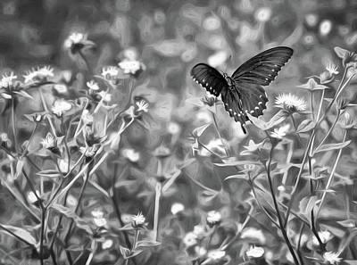 Fluttering Photograph - Fluttering Swallowtail Bw by Steve Harrington