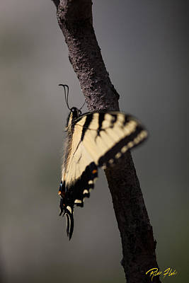 Photograph - Fluttering Swallowtail by Rikk Flohr
