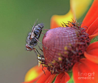 Photograph - Fly A Way by Gary Wing