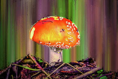 Art Print featuring the photograph Fly Agaric #g7 by Leif Sohlman