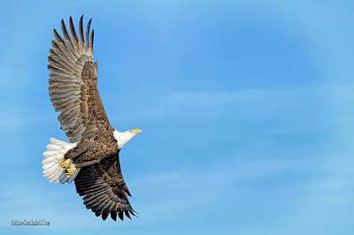 Photograph - Fly American Bald Eagle by LeeAnn McLaneGoetz McLaneGoetzStudioLLCcom