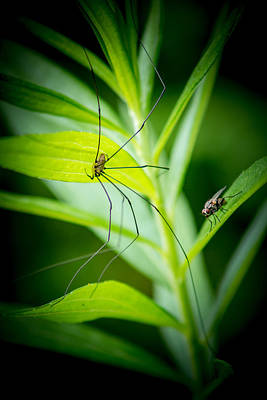 Photograph - Fly And The Spider by Chris Bordeleau