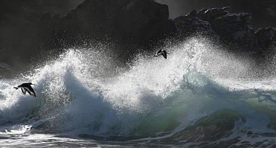 Photograph - Fly Away by Barbara Walsh