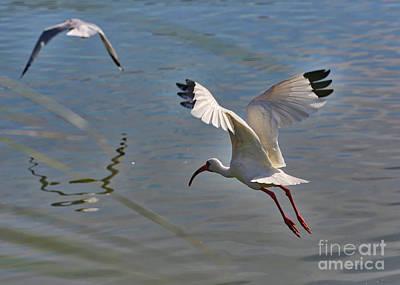 Photograph - Fly Away by Carol Groenen