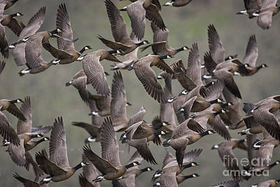 Photograph - Fly Away by Craig Leaper