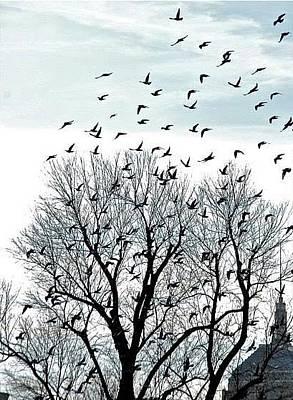 Photograph - Fly Away by Matthew Heller