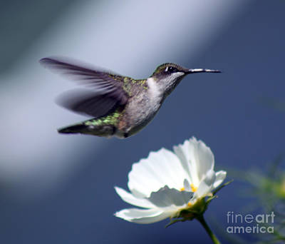 Photograph - Fly By by Cathy  Beharriell
