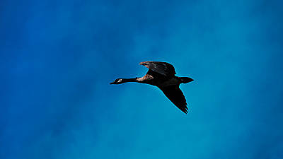 Photograph - Fly By by Philip A Swiderski Jr