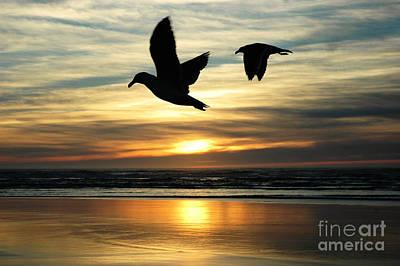 Photograph - Fly Bye by Lori Mellen-Pagliaro
