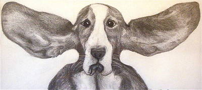 Basset Drawing - Fly Dog by Rebecca Robinson