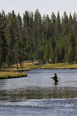 Fly Fishing In The Firehole River Yellowstone Art Print by Dustin K Ryan