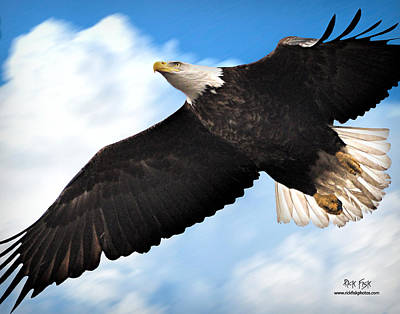 Fly Like An Eagle Art Print by Rick Fisk