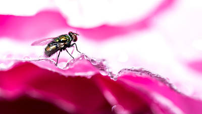 Photograph - Fly Man's Floral Fantasy by T Brian Jones