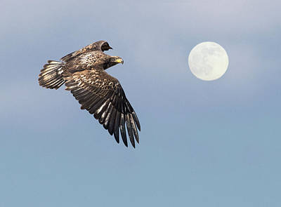 Photograph - Fly Me To The Moon by Art Cole
