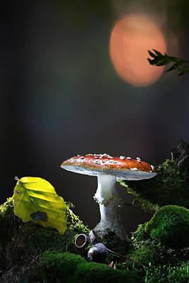 Amanita Mushroom Photograph - Fly Mushroom - Red Autumn Color by Dirk Ercken