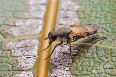 Photograph - Fly On A Leaf by Claudia Ellis