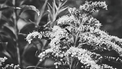Photograph - Fly On Bloom by Pixabay