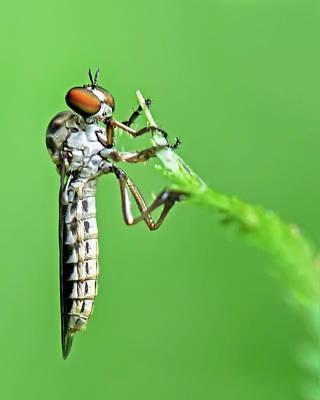 Photograph - Fly On Fern by Carolyn Derstine