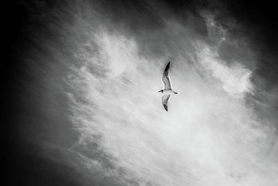 Photograph - Fly On by Stefanie Silva