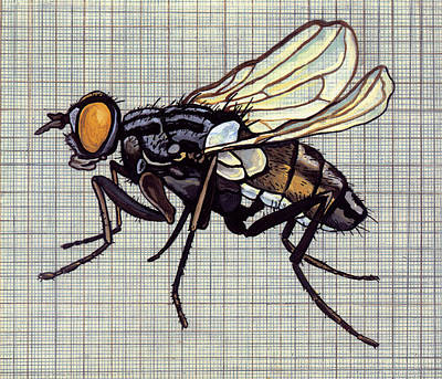 Grid Painting - Fly On The Wall by Karl Frey
