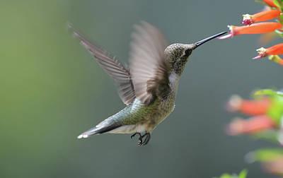 Photograph -  Fly by Rae Ann  M Garrett