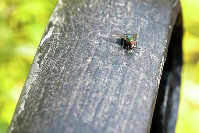 Photograph - Fly Sitting On Wooden Plank by Jacek Wojnarowski