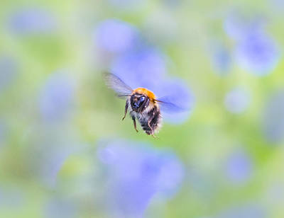Photograph - Fly Your Way by Steven Poulton