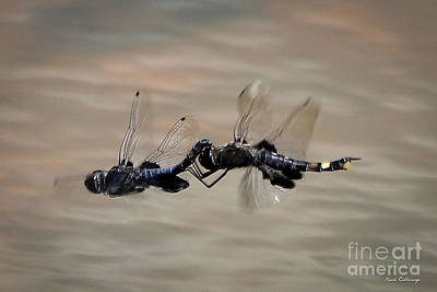 Dragonflies Mating Photograph - Fly United 2 Dragonfly Art by Reid Callaway