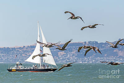 Photograph - Flyby by Kate Brown