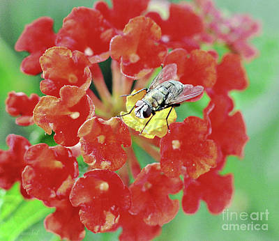 Photograph - Flycatching On Yellow by Debby Pueschel