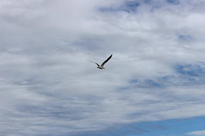 Photograph - Flying Against The Wind by Beth Vincent