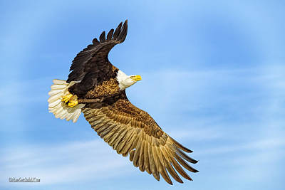 Photograph - Flying American Bald Eagle by LeeAnn McLaneGoetz McLaneGoetzStudioLLCcom