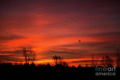 Christina Conway Royalty-Free and Rights-Managed Images - Flying at Sunrise by Christina Conway